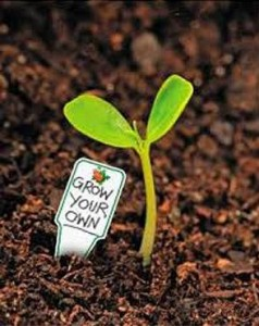 Grow your own talent